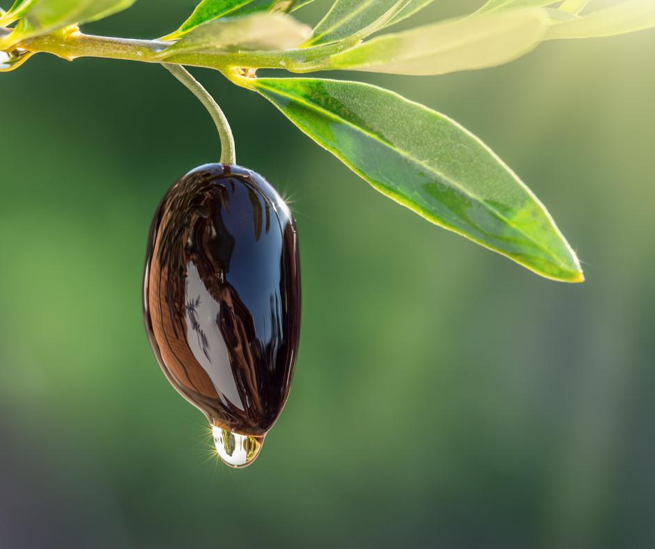 Oliwa z oliwek w kosmetykach ogrody piękna